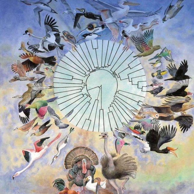 Árbol Fiologenético De Las Aves