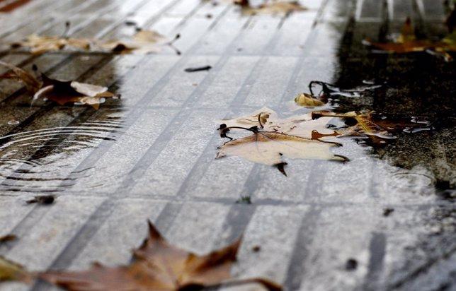 Hojas, lluvia, otoño, agua, mal tiempo