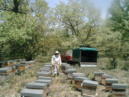 Miel Ecológica Urzapa exportará enjambres de abejas y abejas reinas ecológicas de León en el 2015