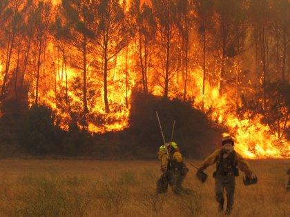 Los bosques de México registran más de 5.000 incendios en 2014