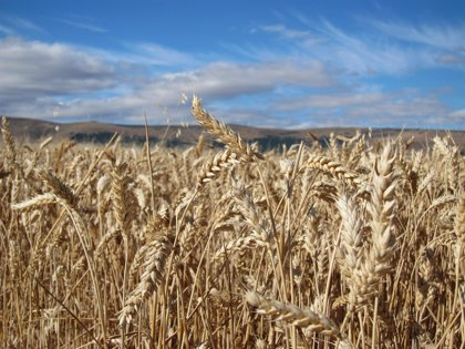 Catalunya y Lombardía cooperarán en materia agraria y agroalimentaria