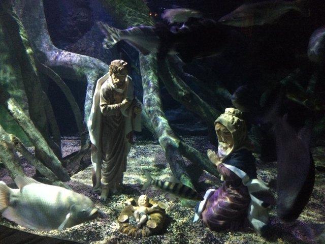Belen acuario sea life