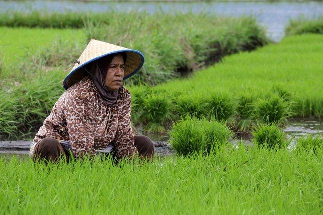 Mujer en campo de arroz