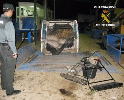 Detenidas siete personas por robar 13 toneladas de aceitunas