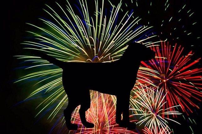 Perros y fuegos artificiales