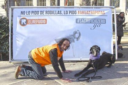 La 'Sanperrestre', contra el sacrificio de animales abandonados