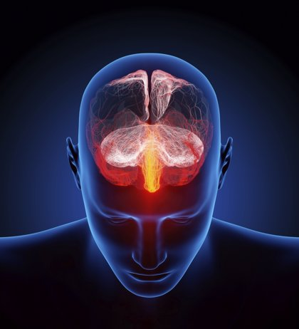 """Detectan la """"firma"""" que diferencia el estado consciente del cerebro del de reposo"""