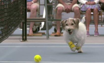 ¿Quienes mejor que los perros para hacer de recogepelotas de Venus Williams?