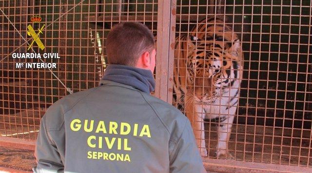 La Guardia Civil interviene varios animales en mercados y circos de Valencia