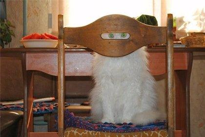 10 gatos ninja que quieren jugar contigo al escondite (Juego)