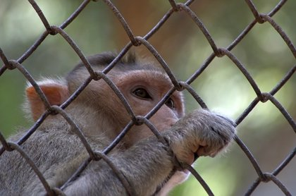¿Qué es lo primero que hace un mono cuando se reconoce en un espejo?