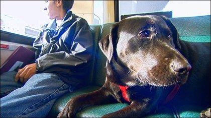 Eclipse, la perra que coge el autobús sola para ir al parque