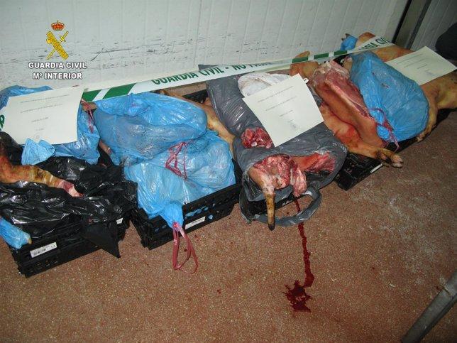 Piezas de ganado porcino intervenidas por la Guardia Civil.