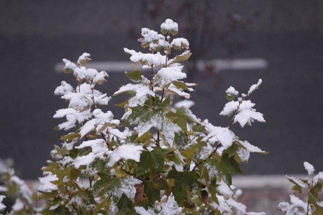 Nieve, helada, frío, invierno, nevada