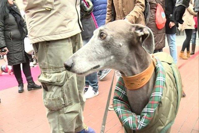 Desfile de perros en Chueca (Madrid)