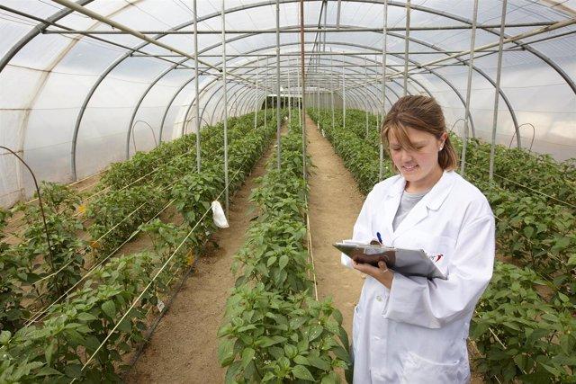 Neiker Tecnalia, Instituto de Investigación y Desarrollo Agrario, Derio, Bizkai