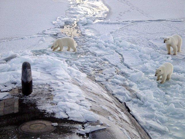 Un submarino emergido en el Ártico junto a osos polares