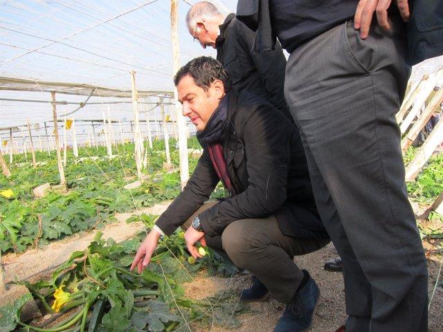 El presidete del PP-A, Juanma Moreno, revisa una planta de calabacín