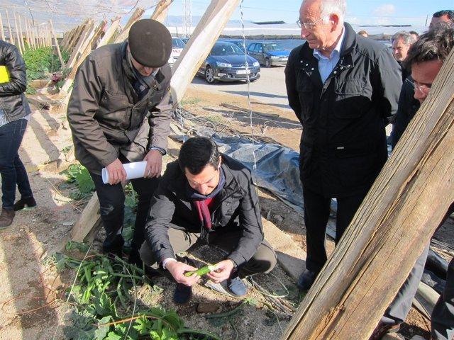 El presidente del PP-A, Juanma Moreno, examina un calabacín