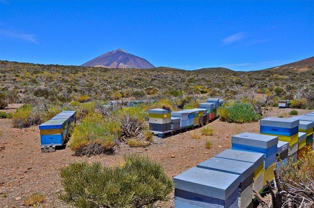 Colmenas en el Parque Nacional del Teide