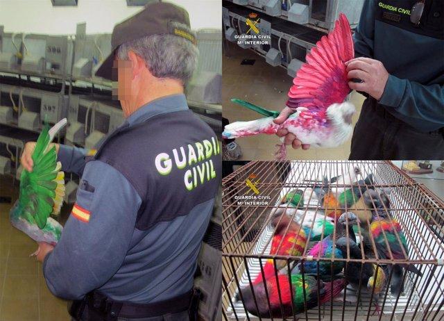 Guardia Civil esclarece sustracción de más medio centenar de palomos deportivos