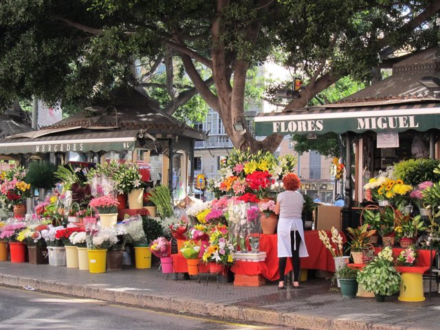 Santos, Día de todos los santos, difuntos, Flores, flor, colores
