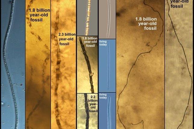 Bacterias que no han evolucionado en 2.000 millones de años