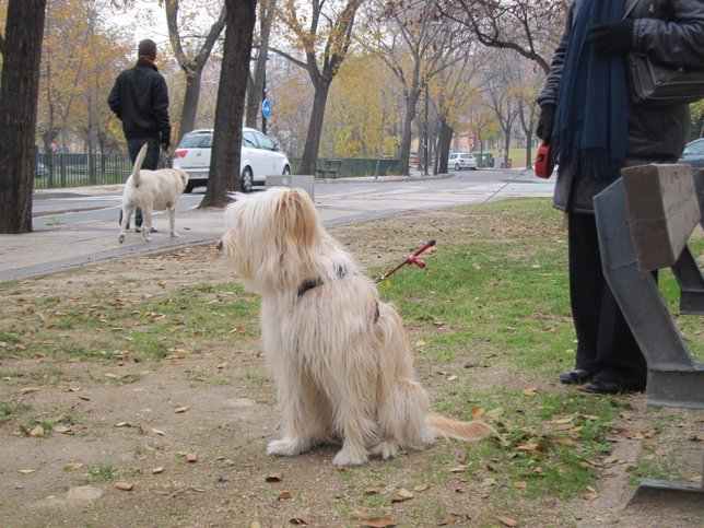 Perros, mascotas.