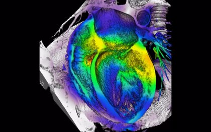 Identifican señales genéticas de los corazones extremadamente grandes