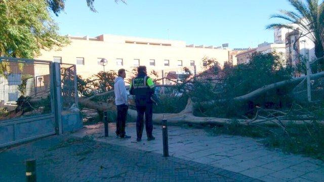 Un policía local en Murcia observa la caída de un árbol por el viento
