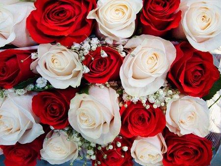 roses-261086_640.jpg