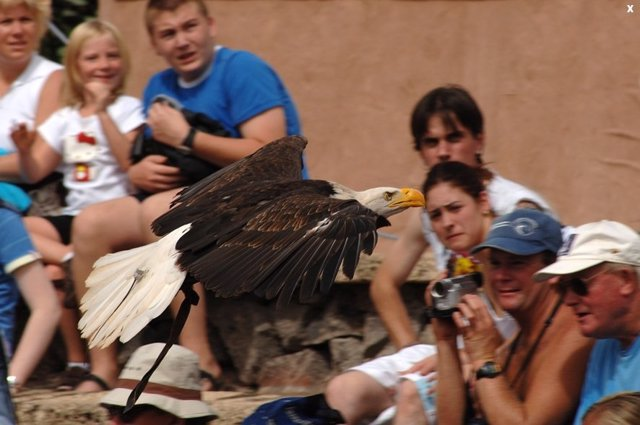 Exhibición de aves rapaces en Jungle Park