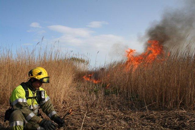 La Generalitat autoriza quemas controladas en el Delta de l'Ebre