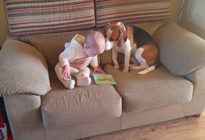 Este vídeo te da 5 claves de por qué los perros y los bebés deben crecer juntos