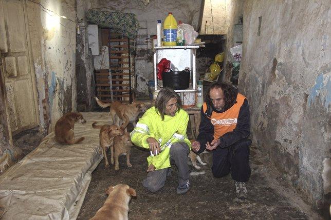 Rescate de 12 perros acogidos por persona con síndrome de Noé