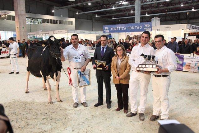 Mejor vaca de Galicia, de Barreiros