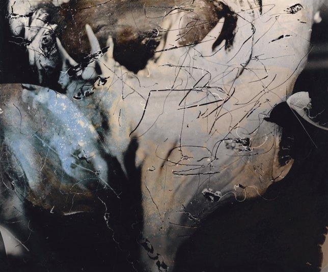 Obra de Joan Fontcuberta en la exposición