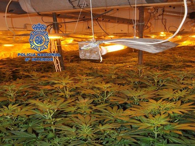 Plantación localizada por la Policía en la provincia de Valencia