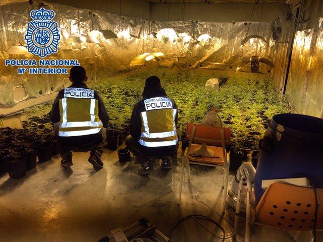 Agentes de la Policía Nacional en el sótano donde se cultivaba la marihuana