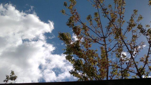 Sol y nubes, nublado, otoño, soleado