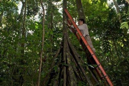 Los bosques amazónicos afectados por la sequía 'inhalan' menos carbono