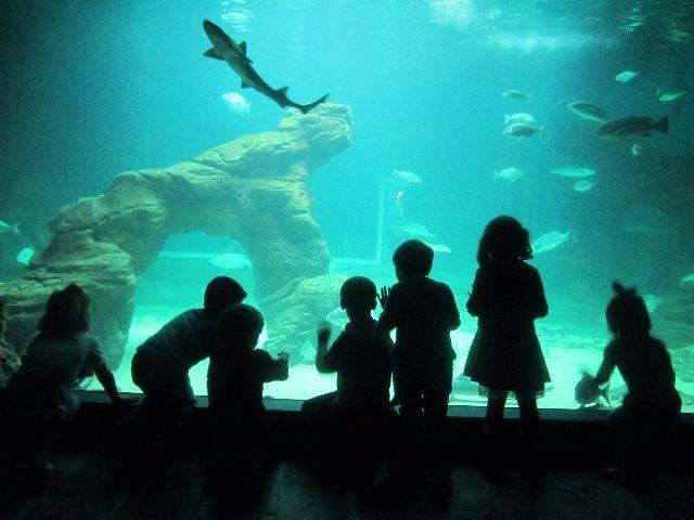 Talleres para niños en el Museo Marítimo del Cantábrico