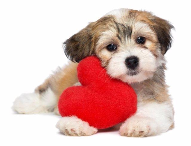 Perro, cachorro, corazón