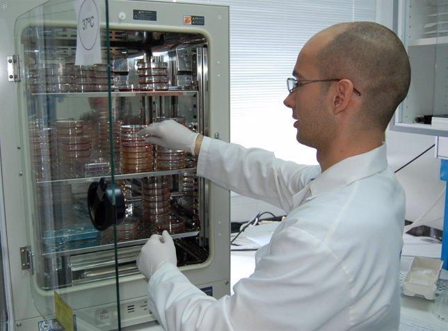 Cultivos celulares de los investigadores de la Universidad de Málaga