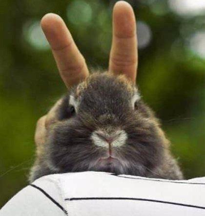 10 vídeos de animales para partirte de risa
