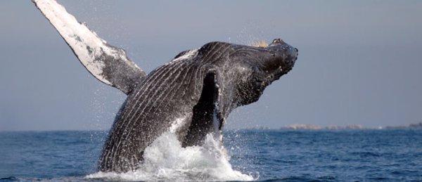 colisión ballena