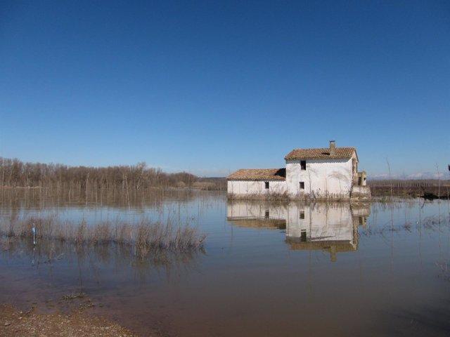 Zona de Alfaro afectada por crecidas del Ebro