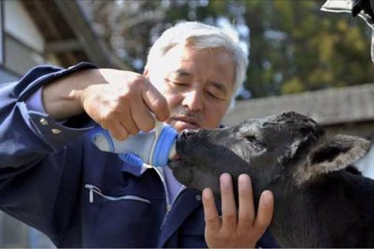 Naoto Matsumura, el hombre que cuida de los animales de Fukushima