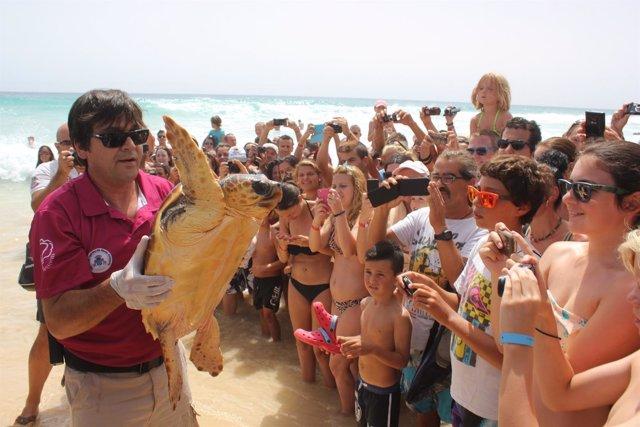 Tortuga boba que se ha devuelto al mar