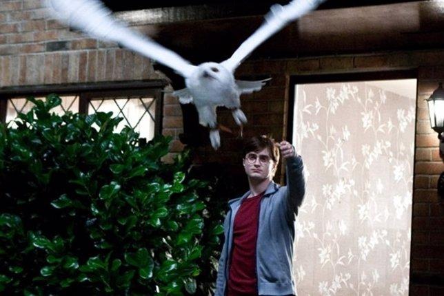 Hedwig, Harry Potter